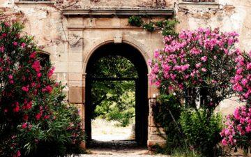 Floral Walkway