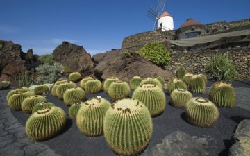 Cactus Garden in Lanzarote, Spain