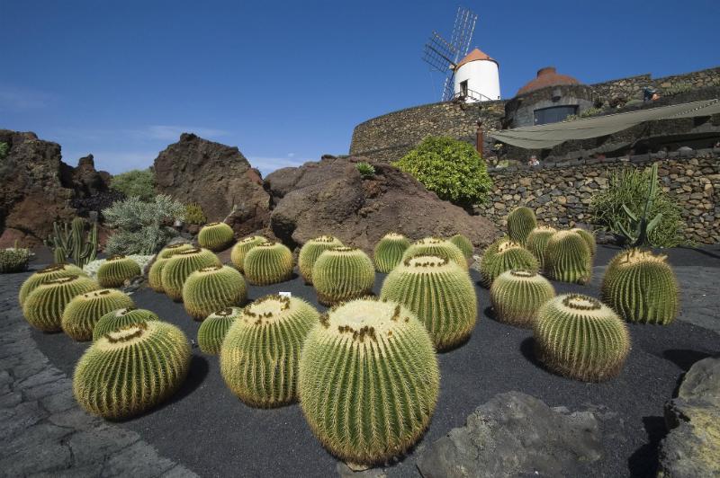 Cactus Garden in Lanzarote, Spain