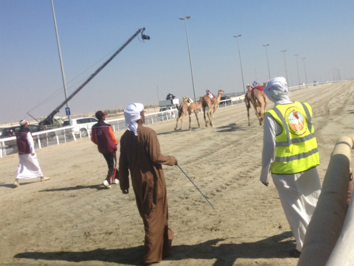 Camels set off from the starting gate, Doha, Qatar