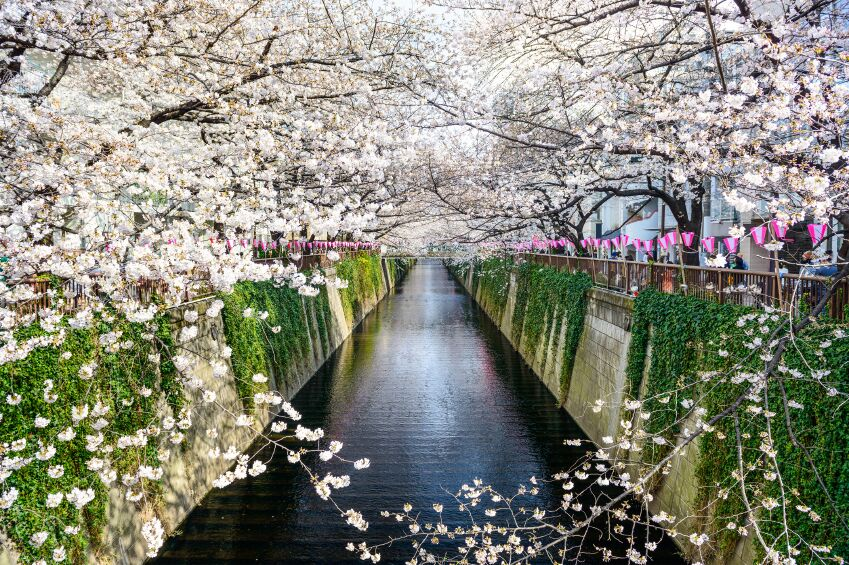 Cherry Blossom Canal, Tokyo