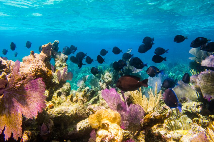 Mesoamerican Barrier Reef, Cancun, Mexico