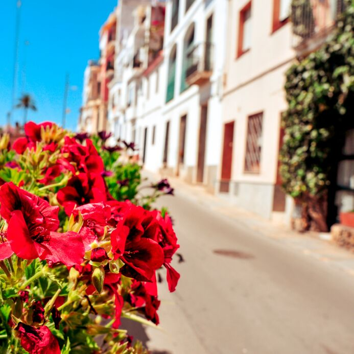 Flowers on a spanish street
