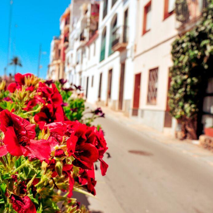 Flowers on a spanish street