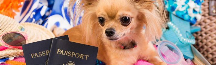 Dog and travel documents