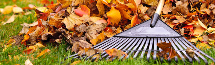 A rake piling up brown and orange leaves on green grass