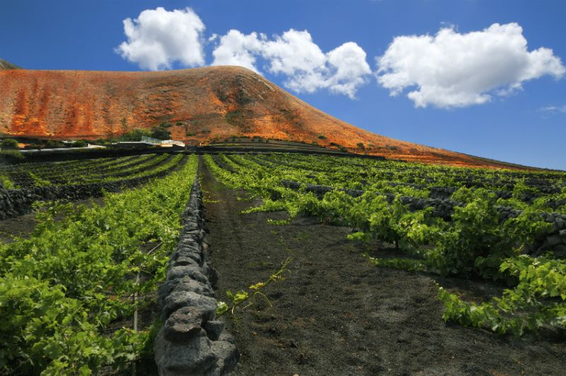 Vineyard, Lanzarote