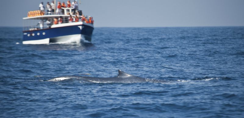 Whale Watching from a Boat in Sri Lanka