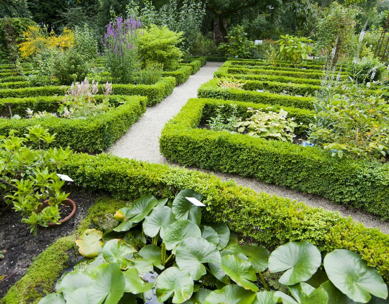 hortus botanicus amsterdam - Amsterdam Garden