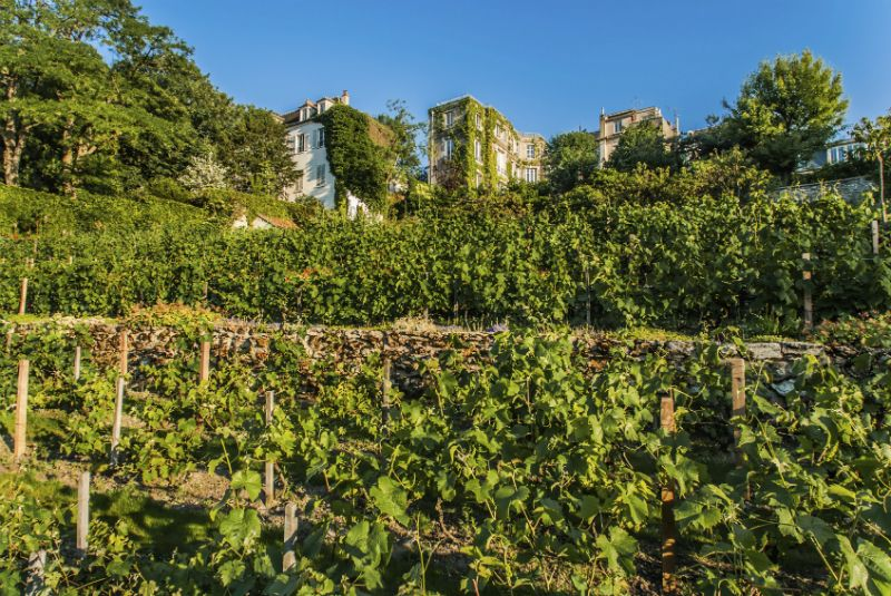 Montmatre Vineyard, Paris