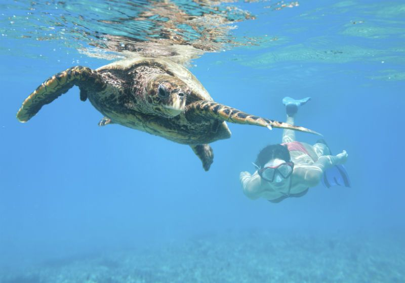 Diving with sea turtles in The Seychelles