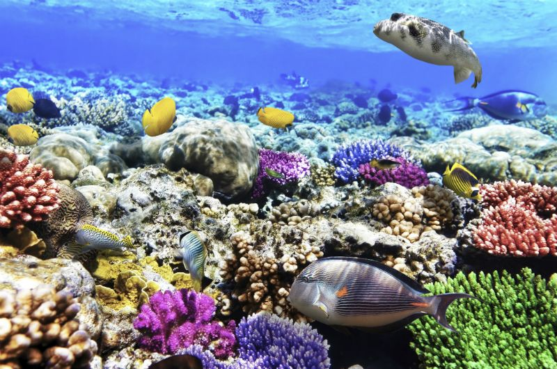 Fish and Coral under the sea