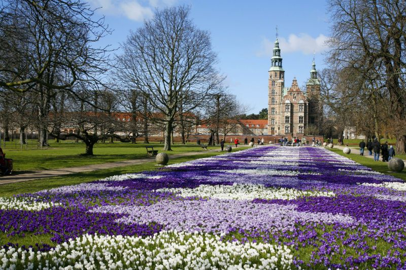 Purple Flowers outside Rosenburg Castle, Copenhagen, Denmark