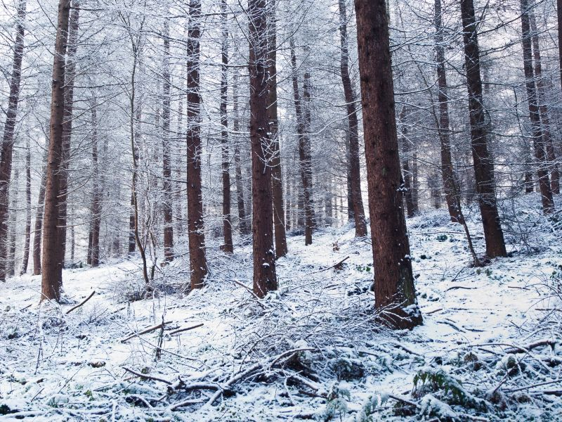 Belfast forest