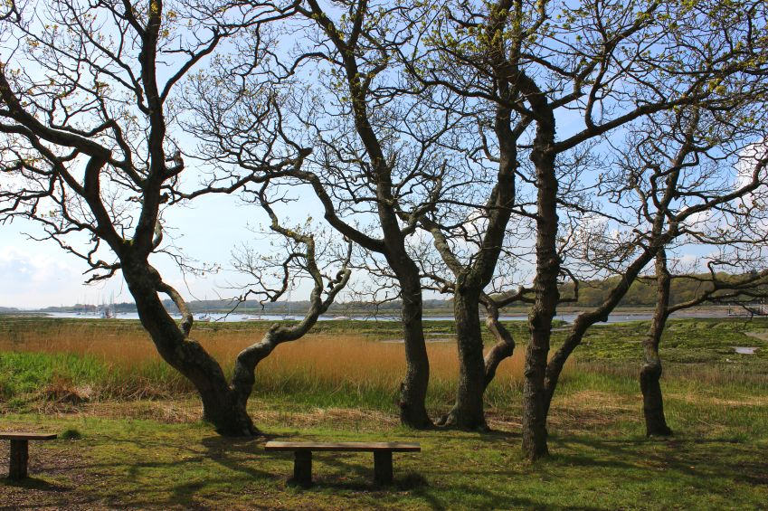 Lepe Country Park, New Forest, UK