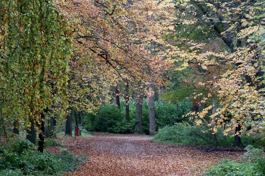 Lickey Hills Country Park, Birmingham