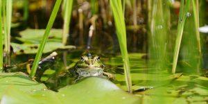 3-Frog